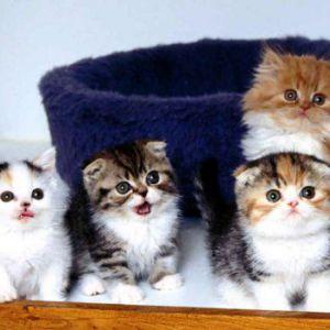 Як доглядати за кошеням
