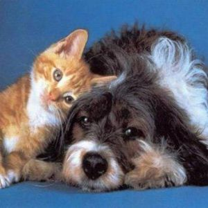 Модна дієта для кішок і собак