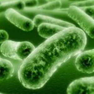 Профілактика і лікування грибкових інфекцій