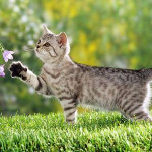 Симптоми і лікування авітамінозу у кішок