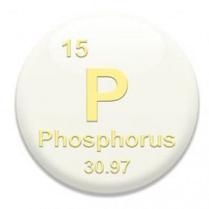 Важливість фосфору для людського організму