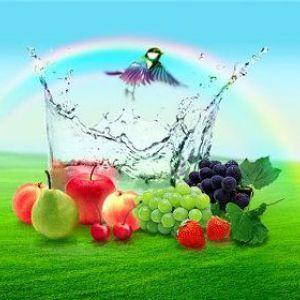 Всмоктування харчових речовин